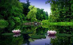 Beautiful Free HD Flower Wallpapers DesignMaz