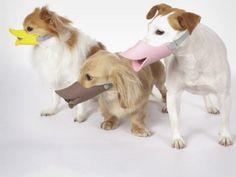 The Japanese made 'Quack' for dogs (© OPPO via laughingsquid.com, http://aka.ms/dog-quack)