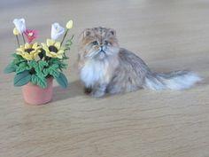 Dollhouse Miniature Cat 1:12 ~ Golden Persian  OOAK Handmade Igma Artsn JParrott-this s her best cat to date-my opinion-Louise Glass