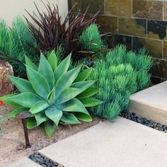 """Mediterranean Landscape"" Succulent Design, Pictures, Remodel, Decor and Ideas - page 17"
