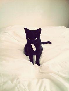 cute cute!