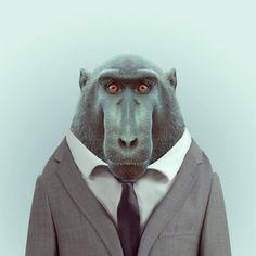 Adorable Zoo Portraits by Yago Partal   Abduzeedo Design Inspiration & Tutorials