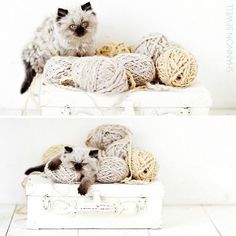 Cute - yarn, string, ribbon & cats - endearing combinations!