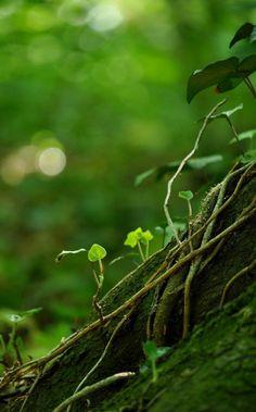 livinginthewind: tree of life by ~Elvenfaith
