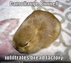 Camouflage Bunneh
