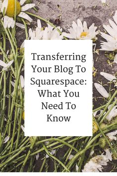 Transferring Your Blog to Squarespace: What You Need to Know - A Branch of Holly