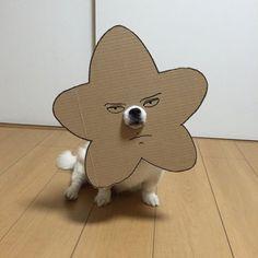 Dog with a sad carton cutout on its head
