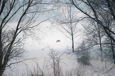 radekkazmierczak fotografia przyrodnicza, wildlife photographer,