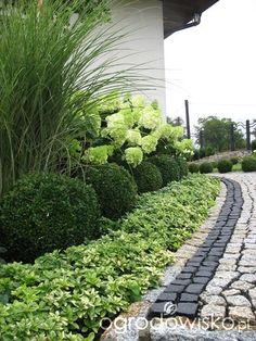 Low border plants in front of boxwood, hydrangea, and Zebra grass