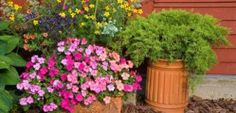 Planters used in the summer garden filled with impatiens, juniper, lobelia, petunia, marigolds and more.