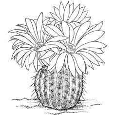 cactus caricatura para colorear - Buscar con Google