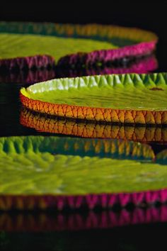Photo Contest - Lily pads on a lake