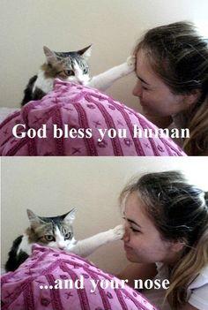 Haha, cats.