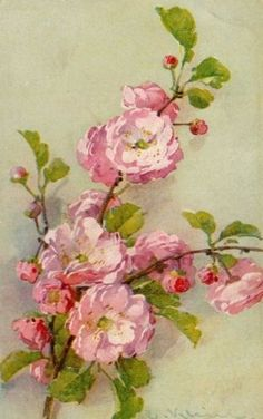 Branch of pink blossoms painted by Catharina Klein - vintage postcard
