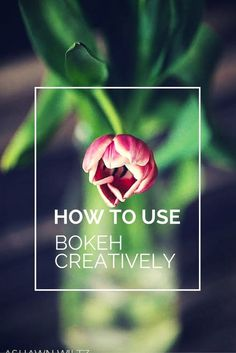 Want those creamy backgrounds in your photos? Here are 3 tips to use bokeh creatively in your photography.