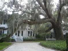 Old Point...Beaufort, SC