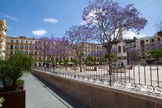 Voorjaar in #Malaga. De paarse accenten op Plaza de la Merced zijn van de jacaranda. #vakantie #Andalusie #Spanje