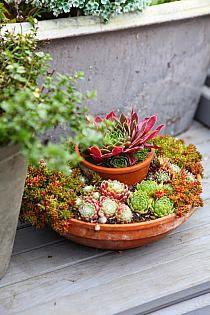 Jak Zrobic Skalniak Na Taras Lub Balkon Na Stylowi Pl Succulents In Glass Container Gardening Flower Pots