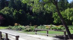 Polson Park ,Vernon bc Canada Taken by Tanya L Gordon -- Curated by: Ultimate Social Club Vernon Bc, Social Club, British Columbia, Beautiful Places, Sidewalk, Canada, Star, Outdoor Decor, Silver