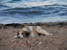 Stray Dog Who Chases After Woman On Beach Turns Out To Be A Treasure In Disguise