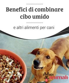 Benefici di combinare cibo umido e altri alimenti per cani Per garantire la corretta #salute del vostro #cane, è importante scegliere #l'alimentazione corretta e alternare cibo umido con altri #alimenti. #Alimentazione