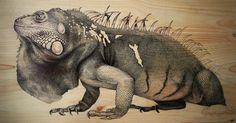 iguana,Martina Billi - Drawings on wood.Martina Billi | Drawings on wood