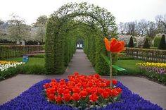 Keukenhof é um jardim de flores em Lisse, na Holanda. Todo ano, milhões de bulbos de flores explodem em incríveis cores.