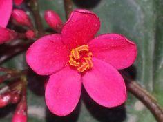Pollen in pink 2