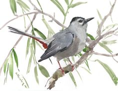 Gray Catbird, original watercolor painting, 9 X 12 in, bird lover art, birding, bird painting bird watching by ORIGINALONLY on Etsy