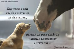 Dog Quotes Love, Equestrian Quotes, Forever Living Products, Mountain Dogs, Eleanor Roosevelt, My Friend, Cute Animals, Flora, Horses