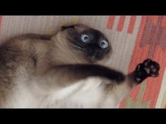 Cats just never fail to make us laugh - Funny cat compilation - http://positivelifemagazine.com/cats-just-never-fail-to-make-us-laugh-funny-cat-compilation/ http://img.youtube.com/vi/IX7pdpm1gp8/0.jpg  Cats are simply the funniest and most hilarious pets, they make us laugh all the time! Just look how all these cats & kittens play, fail, get along with dogs and … ***Get your free domain and free site builder*** Click to Surprise me! Please follow and like us: