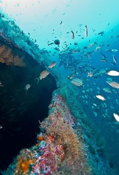 Crazy beautiful underwater life! See our guide: Scuba Diving Destinations That Will Make You Take The Plunge