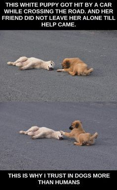 Dogs Are Pals For Life More