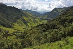 Cocora Valley, Valle del Cocora, Colombia's hiking trails, Hiking trails in Colombia