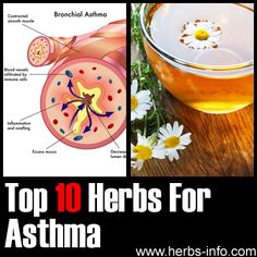 Best 10 Herbs to Treat Asthma http://herbsandoilshub.com/best-8-herbs-to-treat-asthma/  Interesting post that explores the top 10 herbs that can be used to treat asthma.
