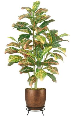 Silk Croton Floor Plant 4 Feet Tall. Our silk croton trees and silk croton plants. Silk trees and plants make it easy to fill any empty corner of your living room, home or office. Need a silk tree for your theater stage,  these indoor #silktrees will add that tropical touch. www.silkspectacular.com