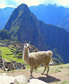 Ciudad perdida. Machu Pichu, Perú.