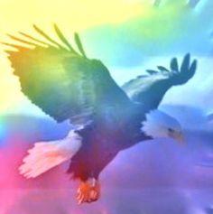 Rainbow eagle!