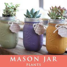 メイソンジャー 多肉植物 サボテン Ball Mason jar メイソンジャー レギュラーマウス 16oz メイソンジャープランツ 植物 ギフト 3個セット
