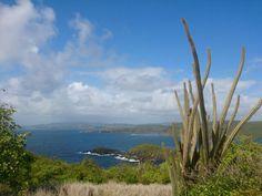Marche  de la Caravelle (Martinique )
