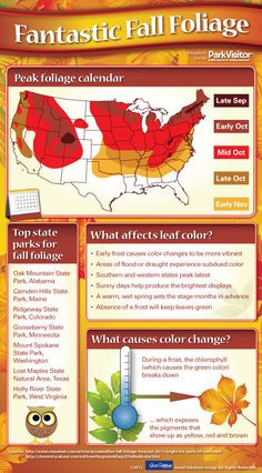 Click for tips on when to view fall foliage near you, plus an explanation of what causes leaves to change color!