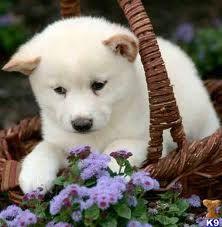 CachorrosBlogs.: Cachorros que Comem Fezes.