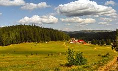 Romania Travel, Golf Courses, Country, Garden, Rural Area, Lawn And Garden, Gardens, Outdoor, Home Landscaping