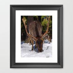 Snow Deer Framed Art Print by Regina Hoer - $35.00#wildlife #deer #fallowdeer #animals #buck #stag #Damhirsch #Hirsch #photography