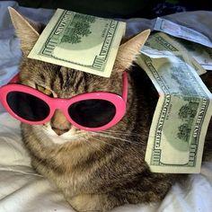 Quotes courtesy of the Kardashians, kittens courtesy of Cashcats. Animal Jokes, Funny Animal Memes, Funny Cats, Cute Animal Photos, Funny Animal Pictures, Cute Little Animals, Cute Funny Animals, Cute Cat Memes, Cute Cat Wallpaper