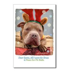 Peace for Pit Bulls
