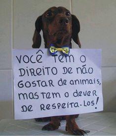 Tens o direito de a não gostar de animais, mas tens o dever de os respeitar!...
