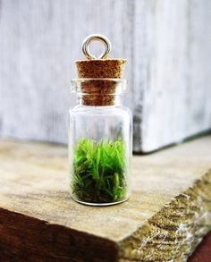 Moss pendant. I quite like this idea of having something live on your neck. Think you probably need to air it when not wearing it.