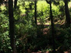 El verde del fin del verano del camino cercano.
