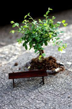 Oh to sit in this little garden... Pothole gardener at Milan Design Week Bonsai dreaming